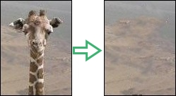 Giraffe removed using InPaint
